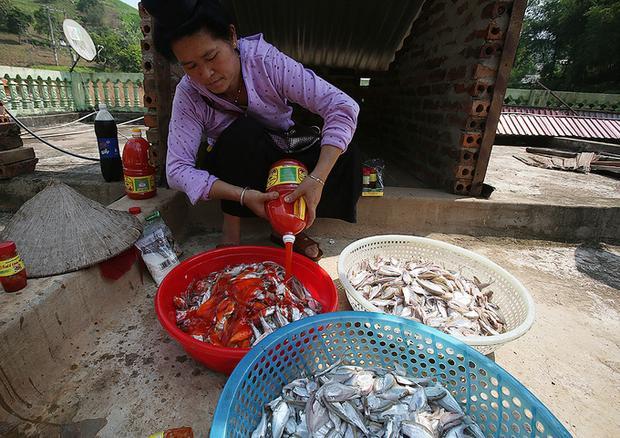 Cá ráo nước tới đâu ướp gia vị tới đó bởi tép dầu thân mỏng nên khi mổ xong phân hủy rất nhanh.