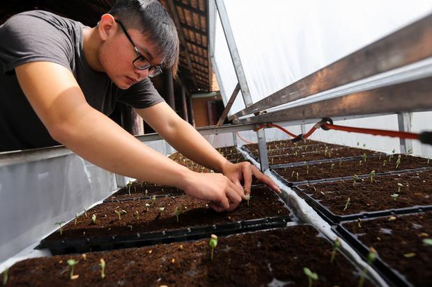 Dưa sau khi đã thu hoạch, số giá thể thừa không được tái sử dụng do giảm dinh dưỡng và nhằm ngăn sâu bệnh cho lứa sau. Giá thể đã trồng được bán cho nông dân trồng rau trong vùng.