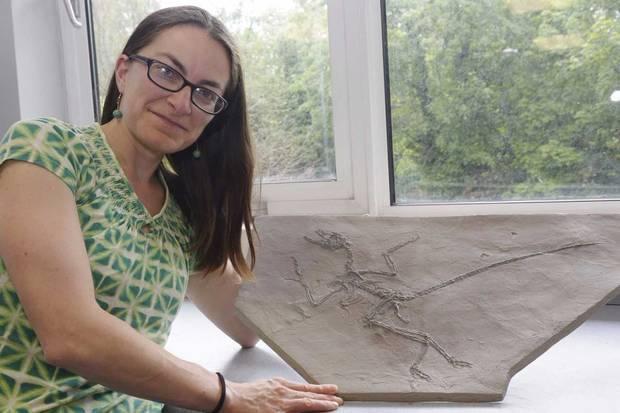 Tiến sĩ Maria McNamara nghiên cứu các tế bào hóa thạch và tế bàoda đầu của các loài chim hiện đại trên kính hiển vi.