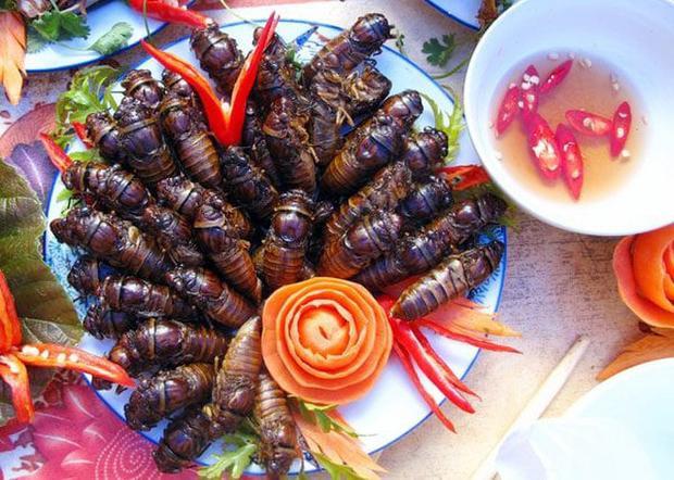 Ve sầu  thứ đặc sản mùa hè giá cao ngất ngưởng, có lúc lên tới 500k/kg