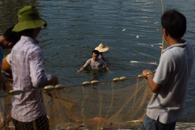 Các công nhân môi trường vớt cá chết lên bờ.