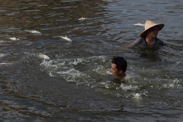 Không chỉ có đội công nhân vệ sinh môi trường, những người dân có mặt cũng xuống hồ phụ vớt cá lên.