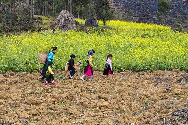 Hình ảnh trẻ em vùng núi cao tỉnh Hà Giang bước qua những đồi cải vàng ươm, một hình ảnh rất đẹp không phải nơi nào cũng có.