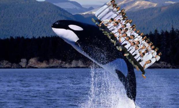 Thậm chí là cả lớp cùng cưỡi cá voi ngắm đại dương..
