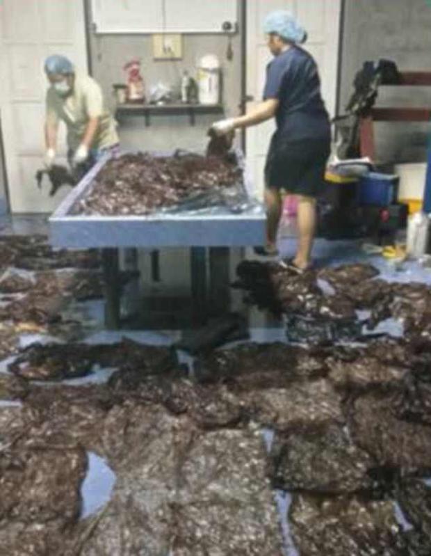 Tổng cộng 8 kg túi nhựa trong bụng con cá nhà táng.