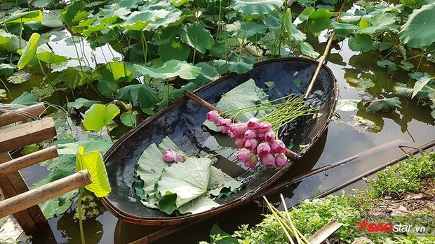 Chiếc thuyền thúng đầy hoa sen để du khách có nơi tạo dáng chụp ảnh.
