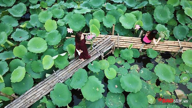 Các hồ sen đều thiết kế lối đi để người dân đến tham quan, chụp ảnh.