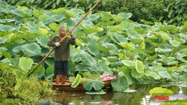 Người chủ vườn chèo thuyền đi hái sen và ướp trà.