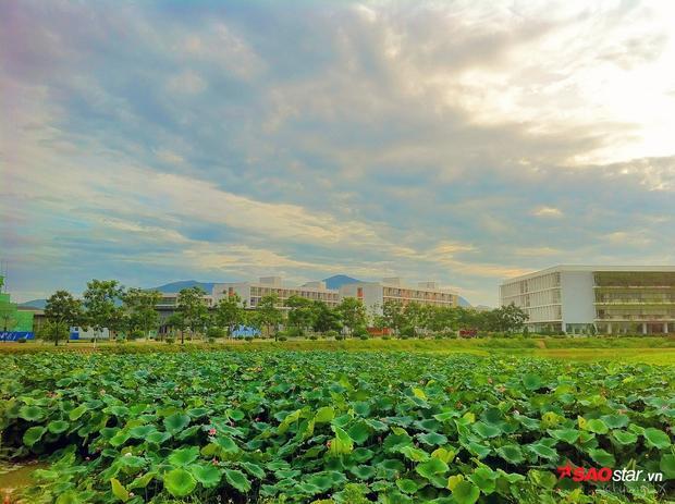 Đầm sen xanh mướt tại khuôn viên ĐH FPT cơ sở Hòa Lạc.
