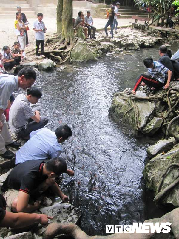 Suối cá ở xã Cẩm Lương
