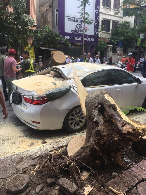 Đang đỗ ven đường, ô tô Lexus bất ngờ bị cành phượng gãy đổ đè trúng