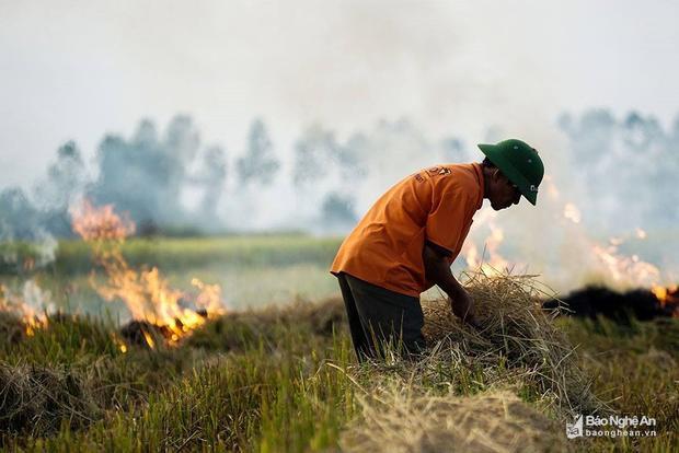 Thơm mùi khói đốt đồng sau khi thu hoạch lúa. Ảnh: Trung Hà