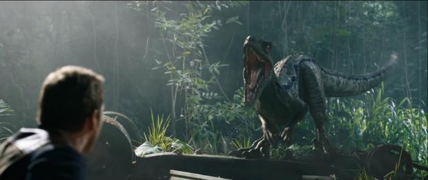 Chú khủng long raptor Blue là mục tiêu mà nhóm thợ săn và các tay buôn nhắm đến.