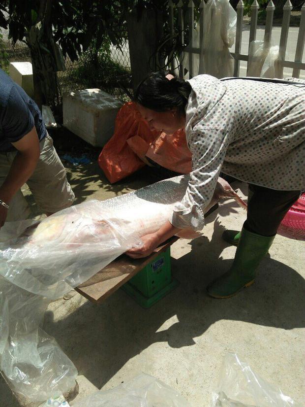 Cá măng sông Đà 35kg hiếm có, mối quen đại gia mới có hàng