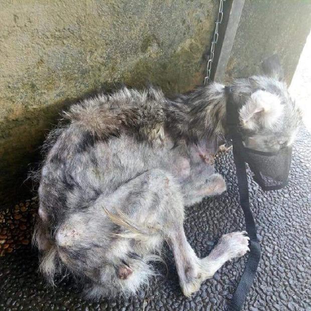 Hầu hết lông trên người chú chó bị rụng, gầy trơ xương.