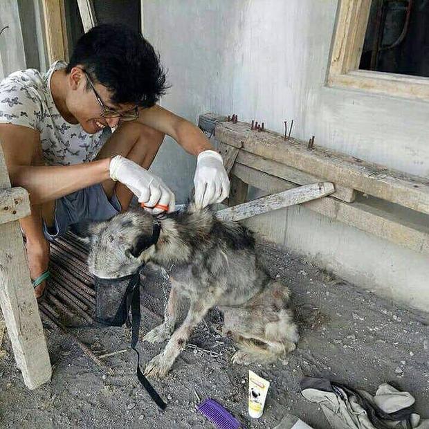 Rico tận tình chăm sóc cho chú chó đáng thương.