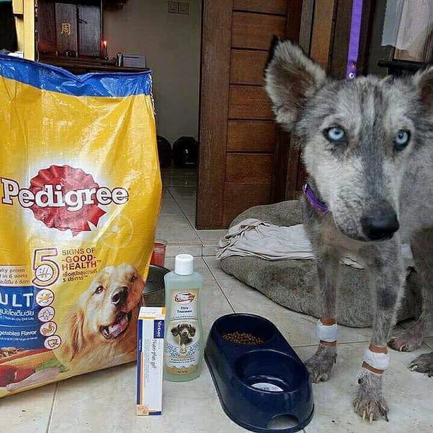 Dành cho chú chó những bữa ăn dinh dưỡng.