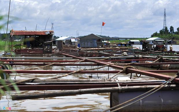 Trong số hàng chục hộ bị thiệt hại, gia đình ông Võ Văn Thảo là trường hợp nặng nhất khi có đến 150 tấn cá chết. Ngư dân này cho biết số cá chết đều đã đến thời kỳ thu hoạch nên gia đình mất trắng nhiều tỷ đồng.
