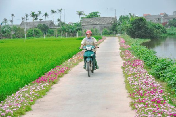 Cần gì đi đâu xa, ở Việt Nam cũng có những con đường hoa thơ mộng đẹp không thua một xứ xở nào!