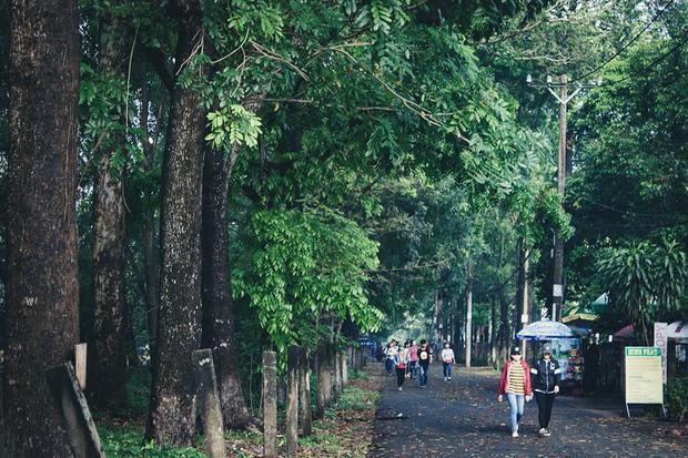 Những con đường thơ mộng rợp bóng cây xanh chỉ có khuôn viên của ĐH Nông Lâm TP.HCM.