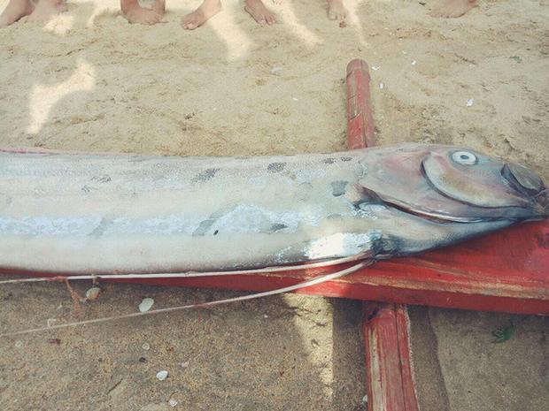 Cá hố rồng hay còn gọi là cá phớn, cá mái chèo được ngư dân trang trọng gọi là Ngài