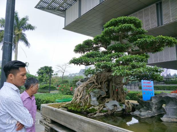 """Tác phẩm sanh kiểng """"Nghinh phong"""" được các dân chơi cây ở Việt Nam đánh giá là có một không hai ở Việt Nam, với độ độc đáo của siêu cây này có thể cây có giá bán gần 10 tỷ đồng."""