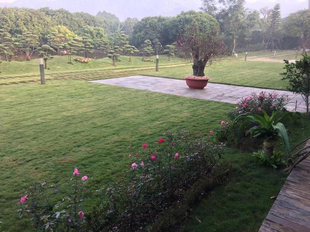 Những khóm hoa hồng trải dọc lối đi tạo điểm nhấn trên nền thảm cỏ xanh biếc.