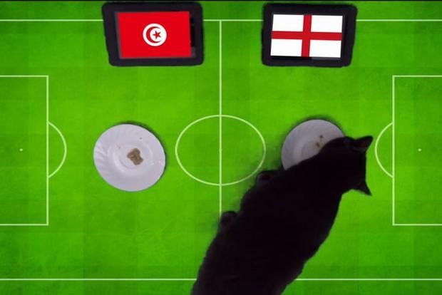 Mèo đen Cass dự đoán kết quả trận đấu.