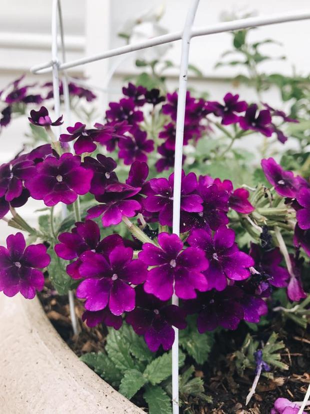 Khu vườn cũng được trang điểm thêm bởi những loại hoa nhỏ xinh.