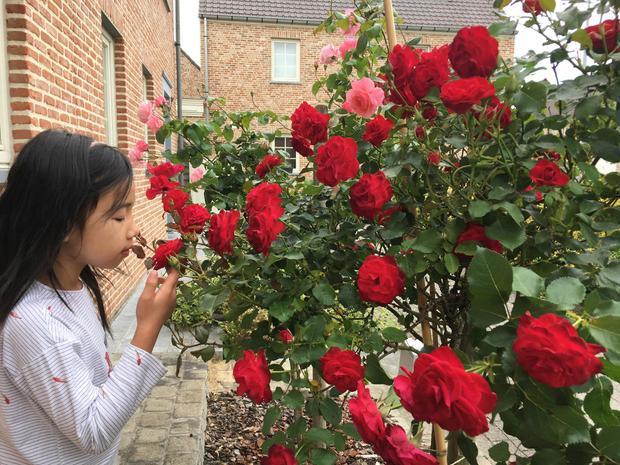 Phía trước nhà là cây hồng thân gỗ nở hoa rực rỡ, địa điểm yêu thích của những cô bé cậu bé mỗi khi tới nhà chơi.