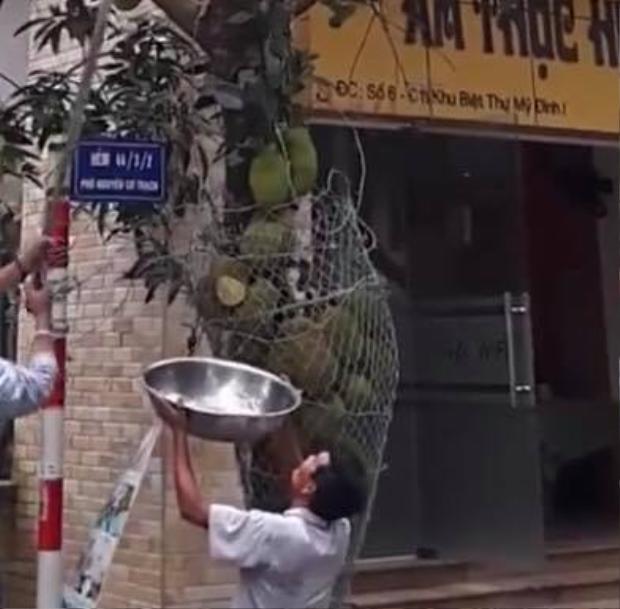 Những trái mít được bao bọc cẩn thận với lưới chống trộm