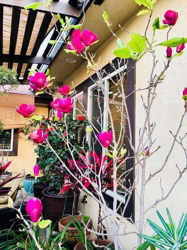 Ngoài những cây cảnh, bonsai đẹp thì nam ca sĩ còn sở hữu vườn cây ăn trái với những loài cây quen thuộc của Việt Nam.