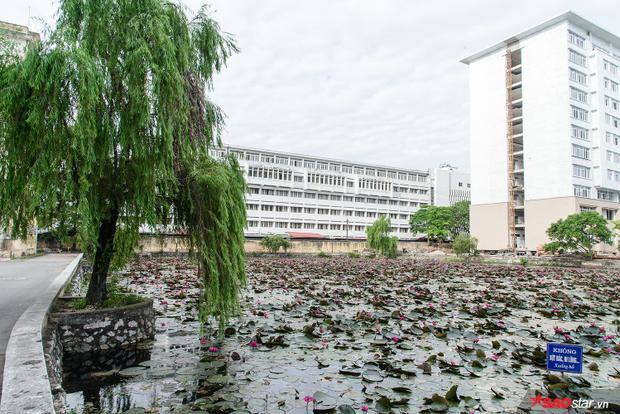 Ngôi trường bề dày lịch sử và kiến thức này còn mê hoặc sinh viên với khung cảnh vô cùng lãng mạn và ngập màu xanh của lá.