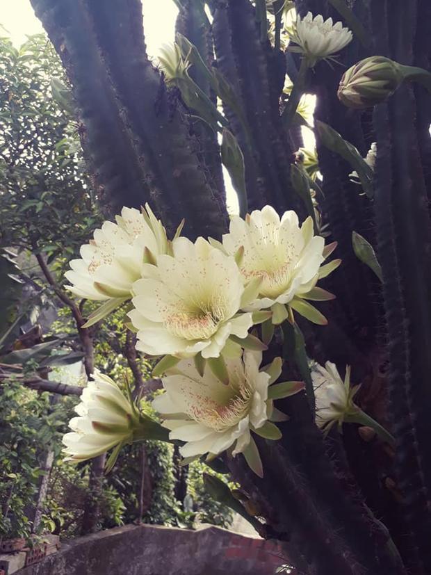 Sắc hoa cùng cánh hoa mỏng manh đẹp đến nao lòng.
