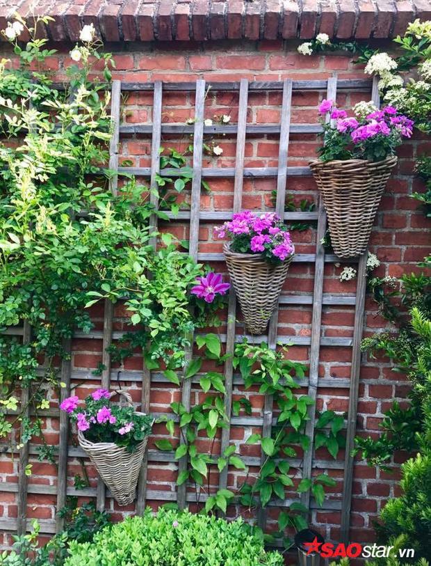 Cách bố trí các loài hoa trong vườn cũng rất nghệ thuật, ấn tượng.