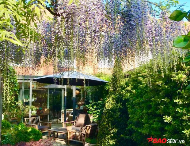 Đây là loài hoa nổi tiếng của Nhật Bản, bao trùm lên khu vườn tạo không gian vô cùng lãng mạn.