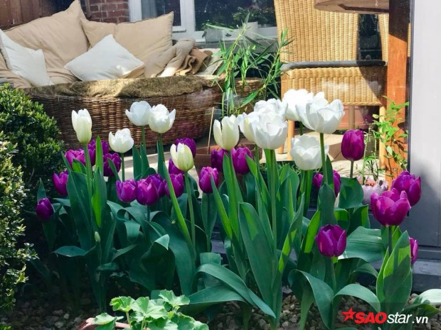 Mỗi mùa đều có những loại hoa đặc trưng riêng.
