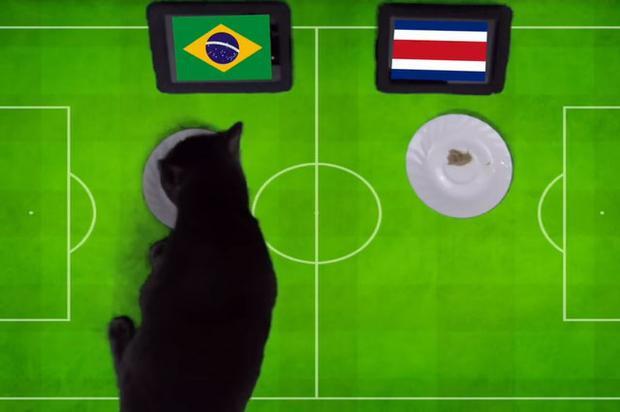 Tiên tri mèo đen dự báo Brazil sẽ giành chiến thắng trước Costa Rica.