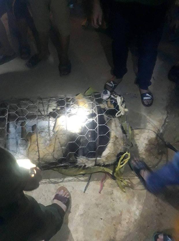 Tang vật của vụ việc là 30kg chó.