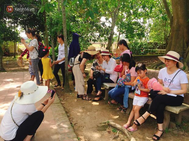 Các phụ huynh và gia đình tranh thủ nghỉ ngơi, chụp ản dưới bóng cây cổ thụ