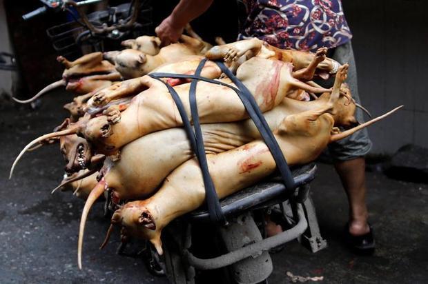 """Trong nhiều năm qua, nhiều người hoạt động trong tổ chức bảo vệ động vật tại Trung Quốc đã """"đột kích"""" vào lò mổ, chặn các xe chở chó để hạn chế phần nào việc giết mổ trong mùa lễ hội. Thế nhưng, nhiều người dân tại Ngọc Lâm còn chỉ trích các nhóm phản đối lễ hội là gây rối trật tự công cộng, phá hủy phong tục của địa phương."""
