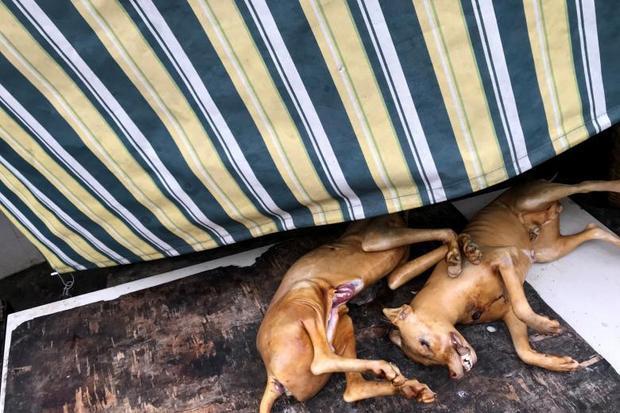 """Zhang Huahua, giảng viên Đại học Công nghệ Hoa Nam thuộc tỉnh Quảng Tây, đã khiếu nại với các cơ quan chức năng thành phố Ngọc Lâm rằng, lễ hội thịt chó vi phạm các quy định về bảo vệ môi trường và an toàn thực phẩm. """"Việc giết mổ chó mà không thông qua các bước kiểm tra nào có thể ảnh hưởng nghiêm trọng đến vệ sinh an toàn thực phẩm cũng như môi trường"""", ông cho biết."""