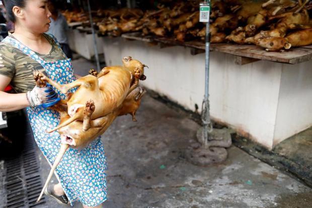 Hàng trăm con chó bị giết hại trong mùa lễ hội.