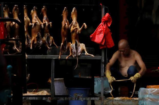 Một người đàn ông đang ngồi làm thịt chó. Những con chó sau khi bị làm thịt sẽ được treo lên quầy hàng để bày bán.