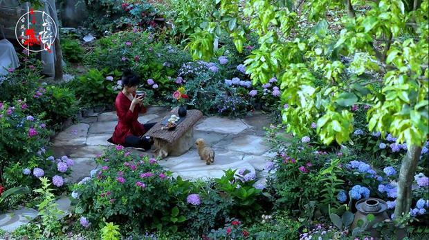 Khu vườn xung quanh nhà Lý Tiểu Thất luôn đầy rau, các loại hoa tùy theo mùa.