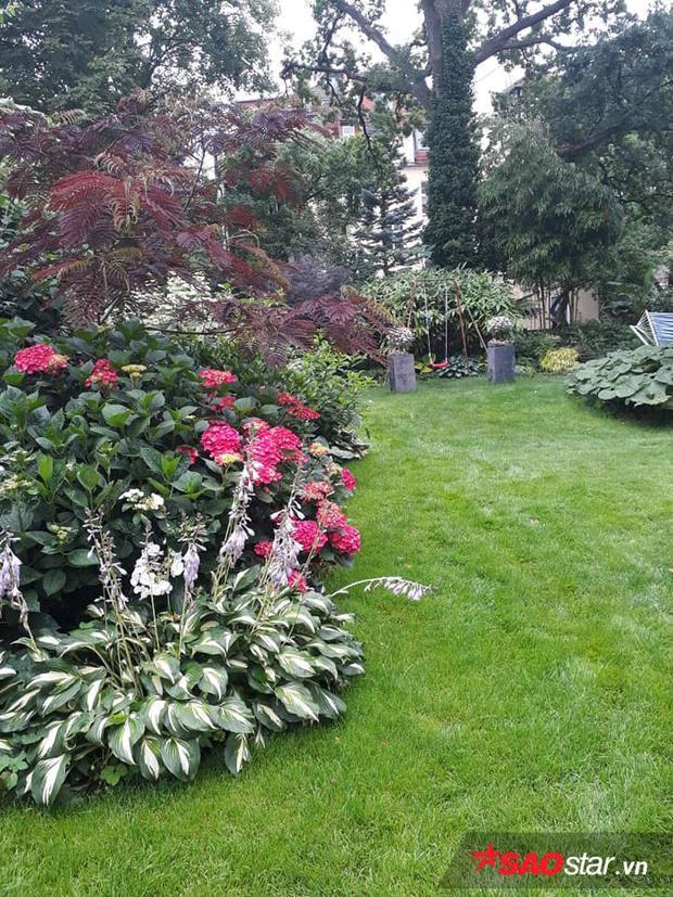 Ban đầu, khu vườn đa số là cây cổ thụ to. Chính vì những cây này che hết nắng nên anh chị trồng được rất ít rau vào hoa. Khoảng năm 2012-2013, anh chị xin phép chính quyền được chặt bớt cây cổ thụ để cải tạo khu vườn của mình.