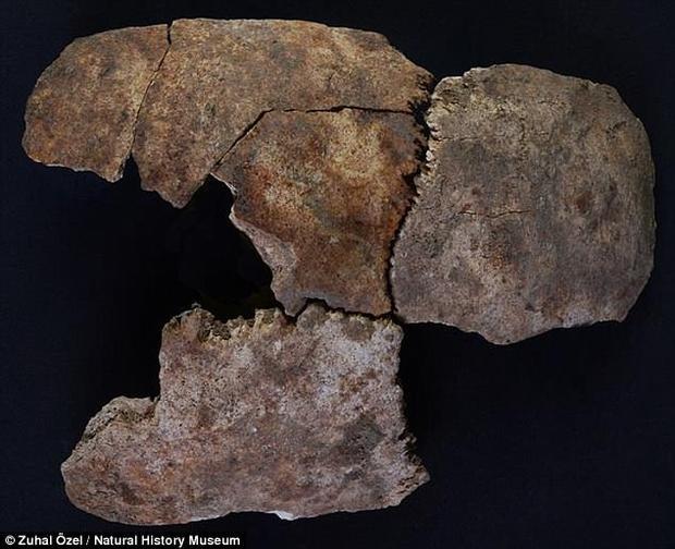 Dấu hiệu thể hiện rằng những người làm trong cung điện đã bị đâm xuyên qua sọ bởi một vật sắc nhọn, như chiếc giáo. Ảnh: DailyMail