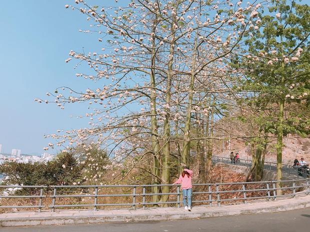 Giữa sắc trắng dịu nhẹ của cây bông cùng gió hè ngọt nắng, cung đường này nom chẳng khác gì xứ sở kim chi Hàn Quốc. - Ảnh: @huyentrang