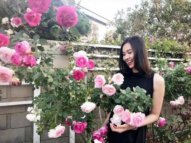 Cũng khoe hoa hồng nhưng lần này của Dương Mỹ Linh. Bạn gái cũ Bằng Kiều khoe những bức hình chụp cùng hoa hồng trong khu vườn của mình.