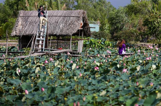 Giữa đầm sen, người chủ thiết kế nhà tranh, cầu khỉ, bắc ván và thang để du khách dễ dàng chụp ảnh. Phí vào cổng của mỗi người là 30.000 đồng.